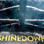 nino saetti shinedown 13 1