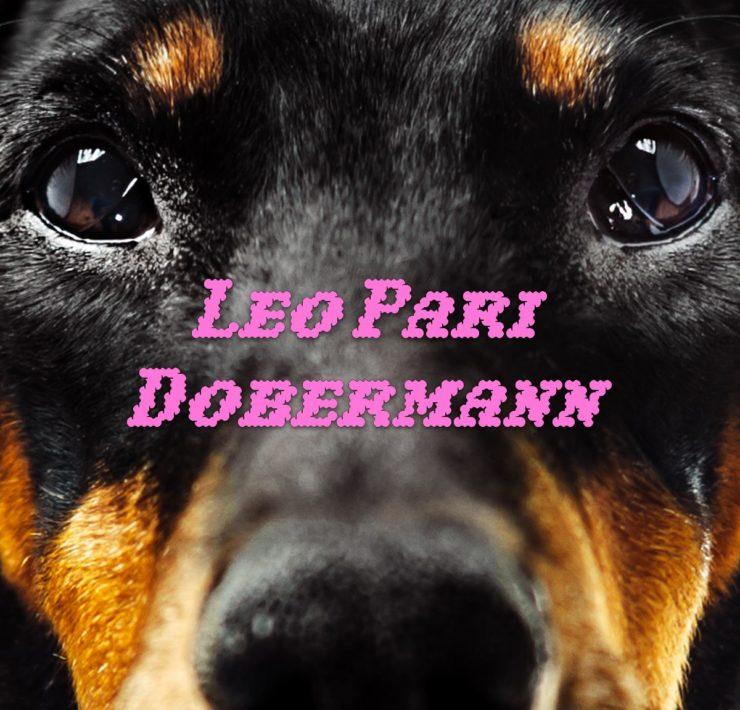 leo pari dobermann